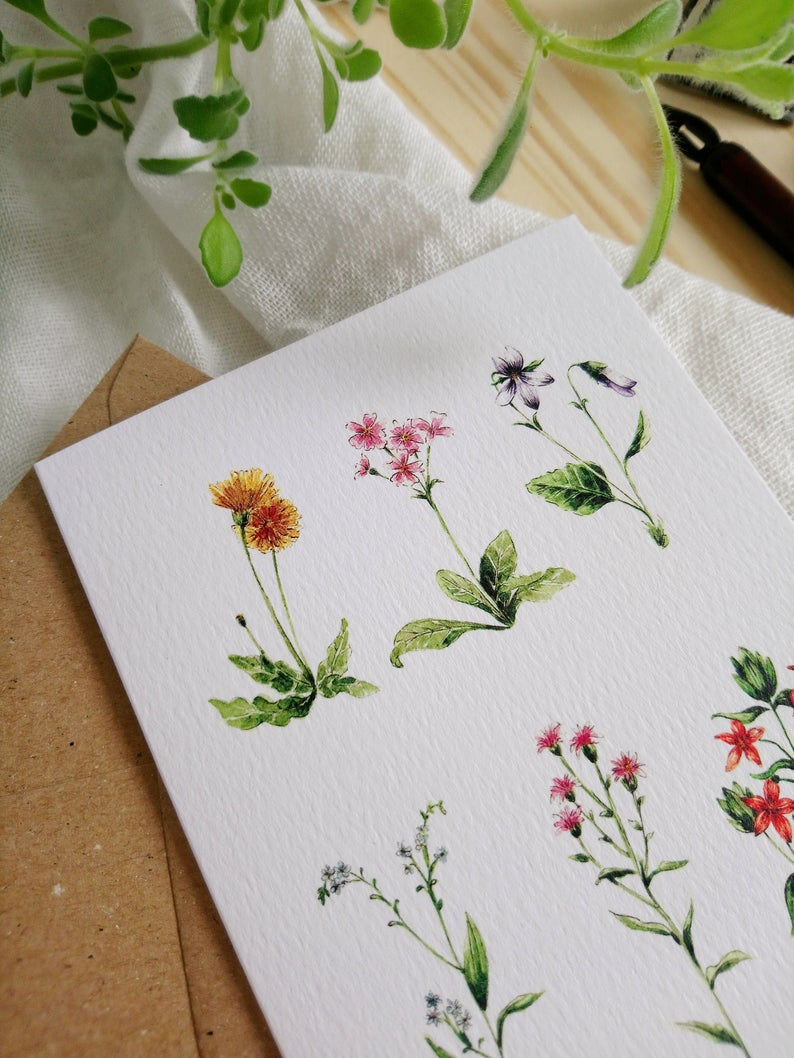 Six Wild Flowers Greeting Card by Renata Plachta